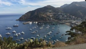 Catalina Harbor