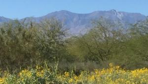San Jacinto Mountains from Sunnylands
