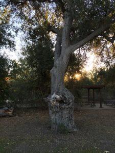 Penny's Woman Meditation Tree